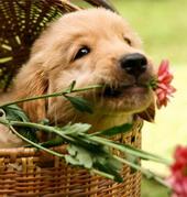 Ароматерапия для животных